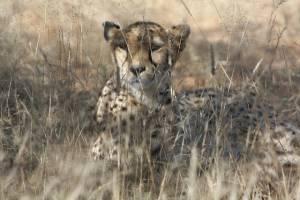 Sanción para las personas que trafiquen especies silvestres