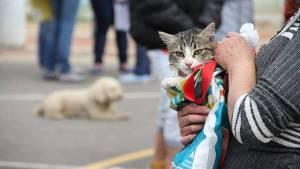 Jornada de esterilización para perros y gatos - Foto: Instituto Distrital de Protección y Bienestar Animal