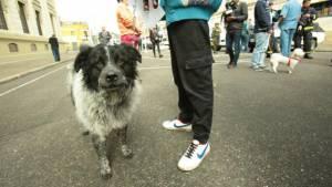 Perro adoptado - Foto: Bienestar Animal