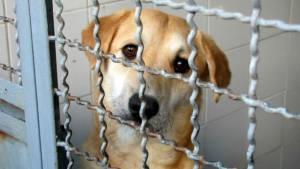 Perro para adopción -Foto: bogota.gov.co