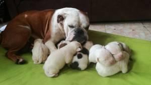 Esta es la trágica historia de la tierna perrita Fiona. Foto: Prensa Protección Animal