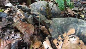Liberación de animales - Foto: Secretaría de Ambiente