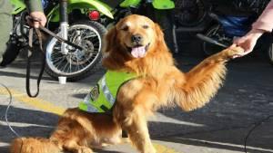 Igor perro antinarcóticos- FOTO: Prensa MEBOG