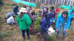Ambiente y voluntarios han plantado árboles en los Cerros. Foto: Secretaría de Ambiente.
