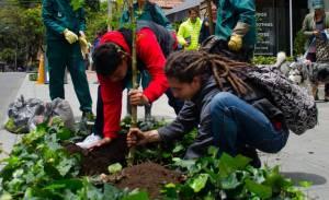 Jornada de plantación Avenida Novena - Foto: Jardín Botánico Bogotá
