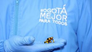 Foto: Secretaría de Ambiente