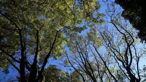 Atención a árboles en riesgo - Foto: Jardín Botánico Bogotá