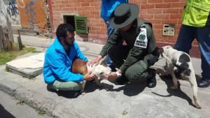 Rescate animal -  FOTO: Prensa MEBOG
