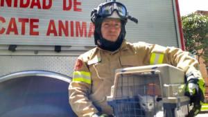 Un gato fue rescatado por los bomberos de Bogotá - Foto: Bomberos Bogotá