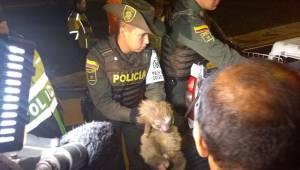 Rescate de Oso - FOTO: Prensa Mebog