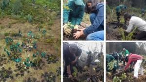 Funcionarios de la Alcaldía trabajando en la restauración del bosque altoandino en el sector de 'La Cascada'