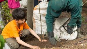 Alcaldía Peñalosa plantó más de 28.000 árboles durante el 2017 - Foto: Jardín Botánico Bogotá