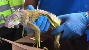 Capturas por tráfico de animales silvestres en Bogotá - Foto: Secretaría de Ambiente