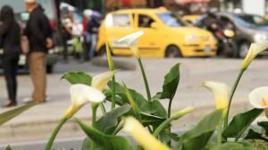 Taxistas recompensa - FOTO: Prensa Consejería de Comunicaciones