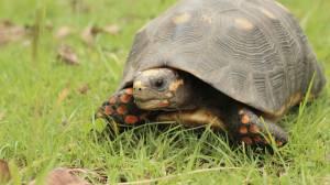 Uno de los animales que será liberado. Foto: Secretaría de Ambiente