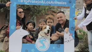 Foto: Instituto de Protección Animal