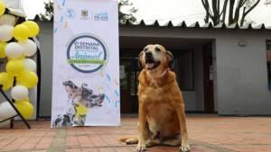 Foto: Instituto de Protección y Bienestar Animal