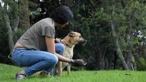 Foto: Instituto de Protección Animal