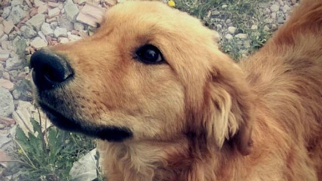 Distrito adelanta acciones para rescate y adopción de animales abandonados en predios del IDU