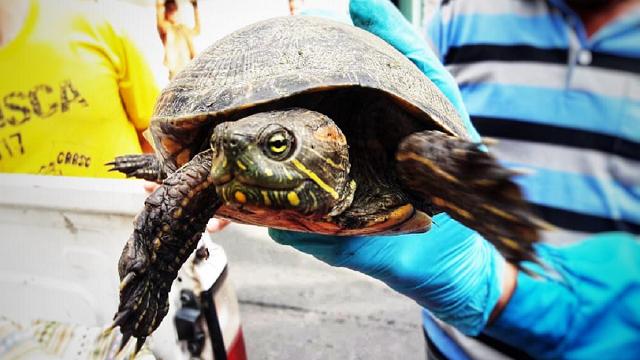 Animales silvestres rescatados en Bogotá - Foto: Secretaría de Ambiente