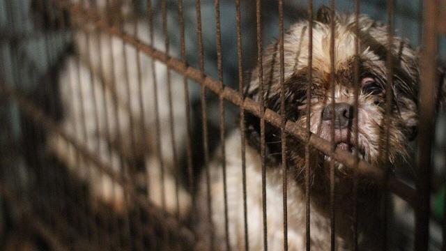 Distrito rescata a más de 40 animales que estaban en mal estado. Foto: Protección Animal