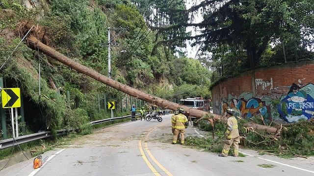 Emergencias por árboles caídos - FOTO: Prensa Bomberos de Bogotá