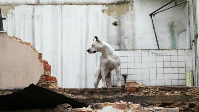Bomberos de Bogotá enváin perros rescatistas a México - FOTO. Prensa Bomberos