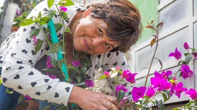 La meta de la Alcaldía es llegar este año a 28 mil buganvilias plantadas.