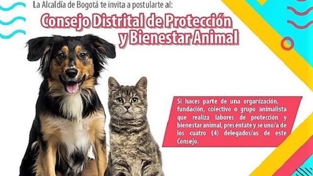 Consejo Distrital de Protección Animal - FOTO: prensa IDPAC