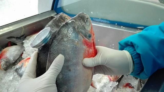 Decomisan pescado por incumplir normas sanitarias - Foto: Secretaría de Salud