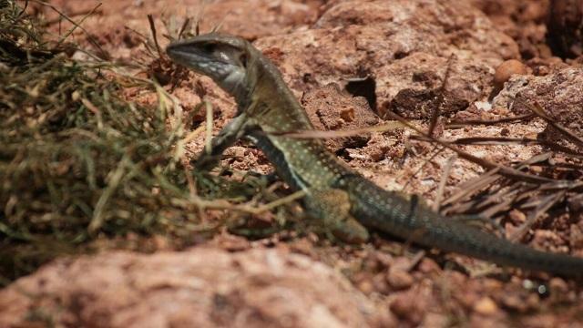 Liberan 46 especies silvestres en el departamento del Meta - Foto: Secretaría de Ambiente