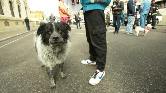 Ser hogar de paso significa tener temporalemente al perro, hasta que sea adoptado.