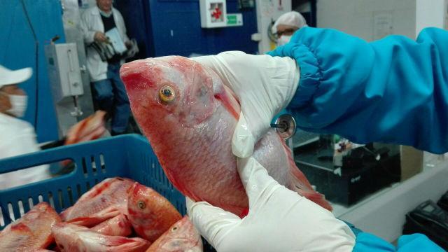 Control a la venta de pescado - Foto: Secretaría de Salud