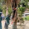 Con los residuos de las podas y mantenimiento de árboles el Jardín Botánico produce abono