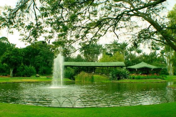 Catorce razones para visitar el Jardín Botánico de Bogotá ...