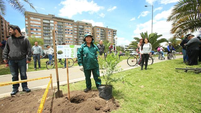 Con Plan T la Alcaldía plantar 10.000 árboles este año - Foto: Alcaldía de Bogotá/Diego Baumán